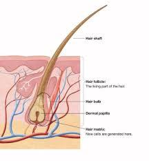 Hair Transplant Using Body Hair